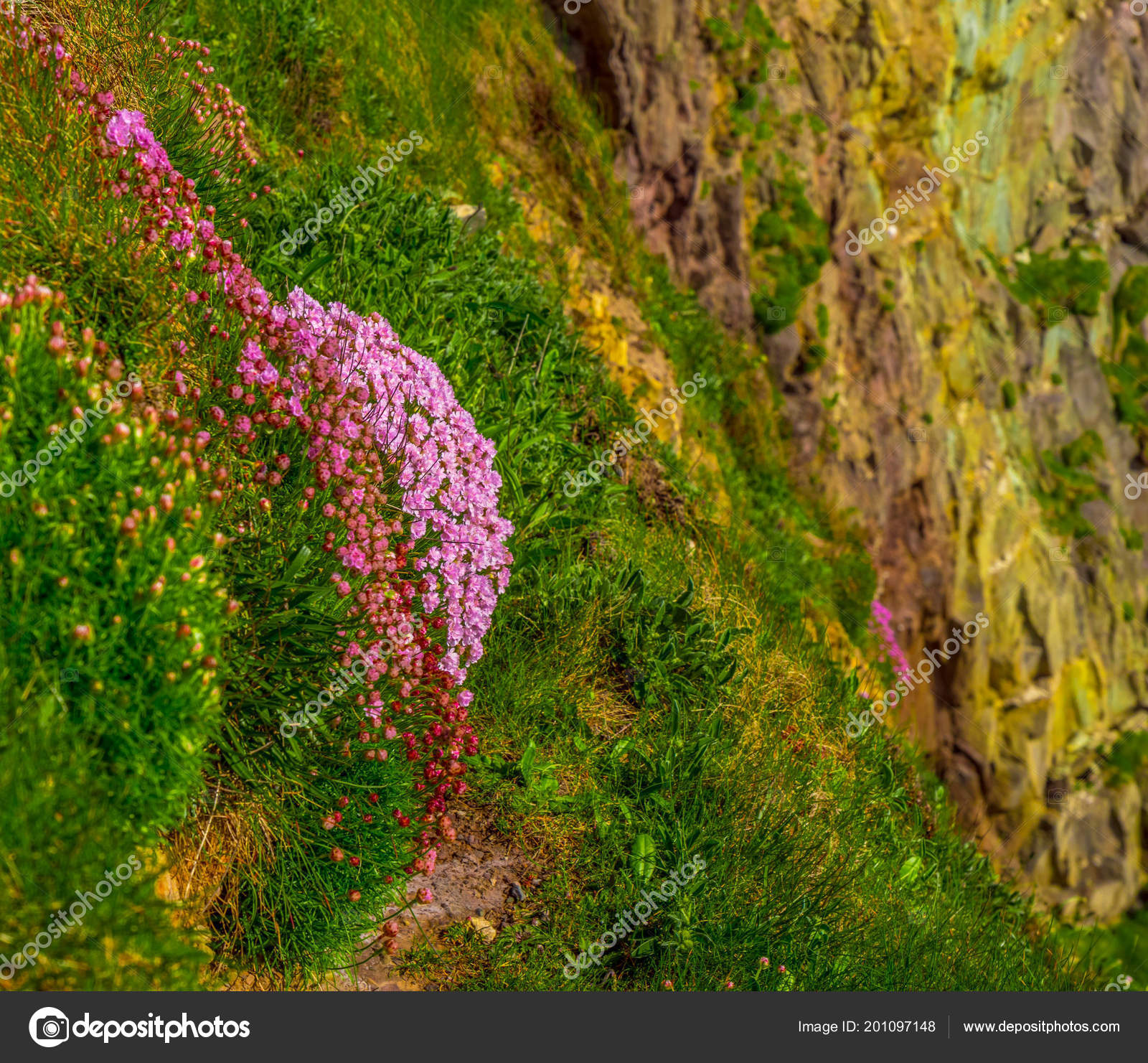 Beautiful Flowers On The Green Hills Of Ireland Stock Photo