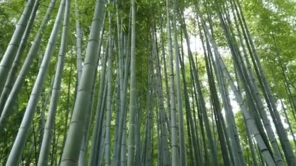 Úžasné široký úhel pohledu z bambusové lesy v Kamakura