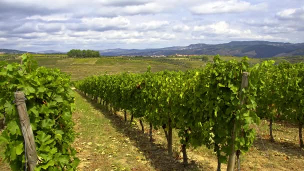 Malebný výhled na vinice v Portugalsku - záběry z cest