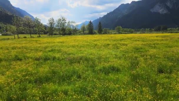 Tiefflug über eine grüne Wiese in den Allgäuer Alpen. Drohnenaufnahmen aus der Luft