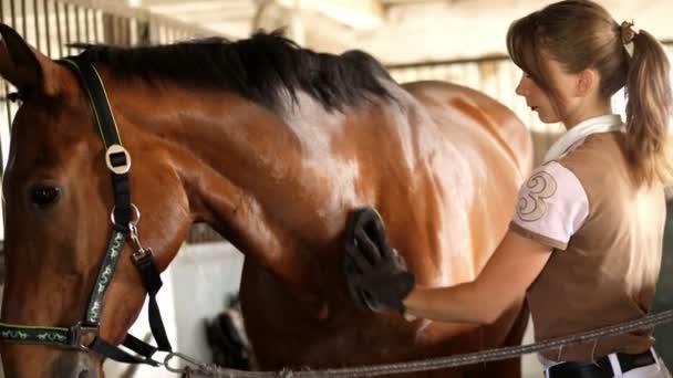 stabilní, dívkou jezdcem v jezdecké oblečení čistí se speciální kartáč, hřeben její Mladá krásná hnědka, plnokrevný hřebec