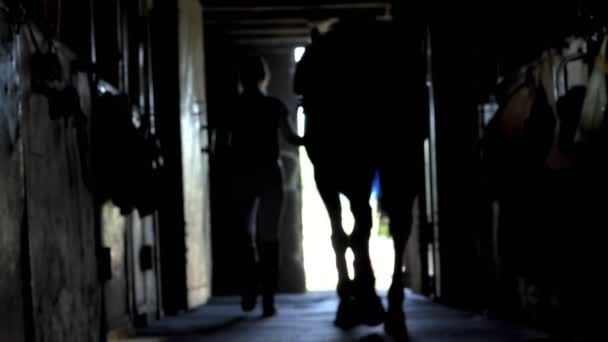 against the light, the dark outlines, silhouettes of the horse and the girl . Young jockey is walking with a horse out of a stable. Rear back view. Love for animal.