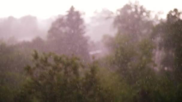 pohled shora, zaměření na velké kapky deště, městský park, jarní den bouřka v městě, silný vítr a déšť, liják s krupobitím. silné nárazy větru
