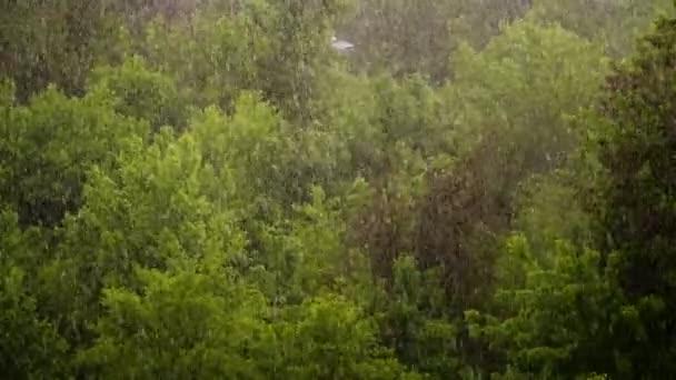 pohled shora, městský park, jarní den, bouřka v městě, silný vítr a déšť, liják s krupobitím. zaměřit na velké kapky deště, silné poryvy větru