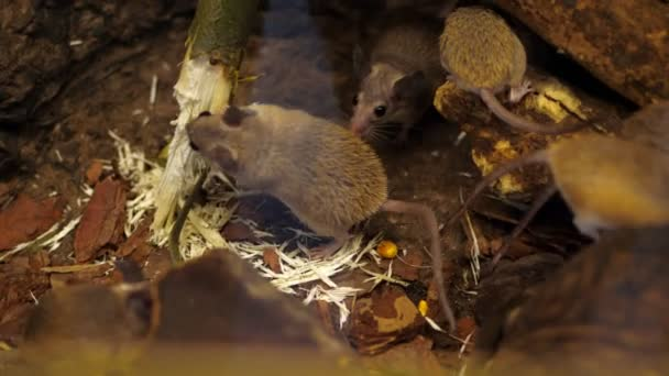 Wild forest, small mice, rodents, gnaw a branch, a tree on nature. close-up