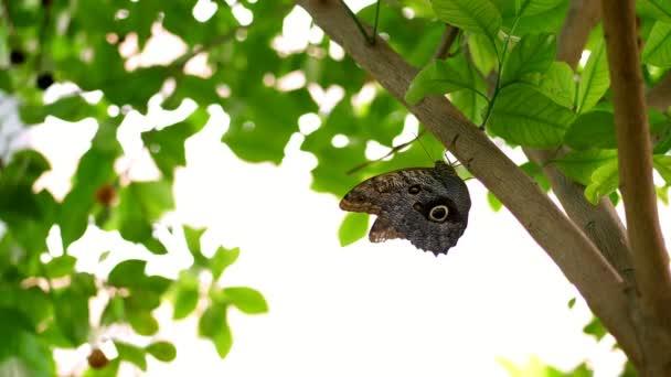 detail, na větvi, mezi listy tam je krásný velký motýl s krásným vzorem na křídlech. Wiggles křídla