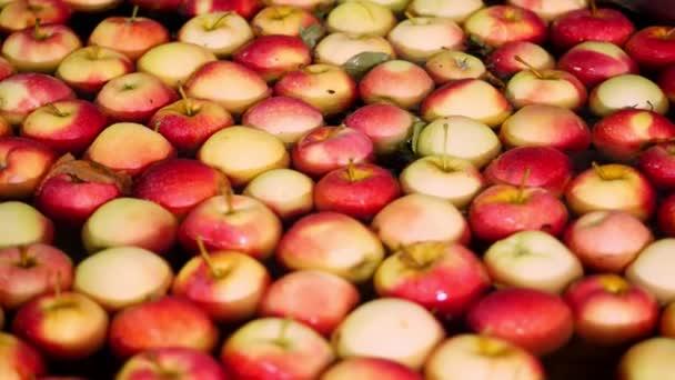 čerstvě vybral sklizeň jablek. Proces mytí jablek v ovoce výrobní závod, koupele, balení vana ve skladu ovoce. Třídění jablek v továrně. potravinářský průmysl
