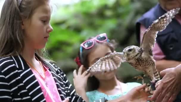 domácí sova. dívka, která na straně a tahy malé pestré sova. detail. v lese, parku na procházku, letní den