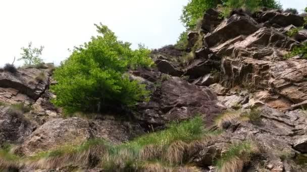 příroda, krásné horské krajiny lesů v alpské pohoří. Na strmé útesy růst keřů, stromů. letní den