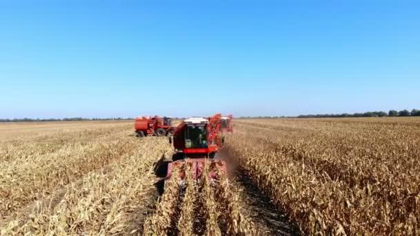 Letecký pohled shora. velké červené spojit kombajn stroje sklizeň kukuřičného pole počátkem podzimu. traktory, filtrování čerstvé lopuchem z listů a stonků. Letecká zemědělství