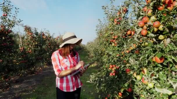 View of a Young female business farmer or agronomist working in the apple garden, using digital tablet for better quality control, Focused on work.. Smart farming and digital agriculture concept.