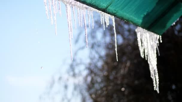 Winter, frostig, schneereich, sonnig. Großaufnahme, große transparente Eiszapfen hängen vom Dach gegen den Himmel.
