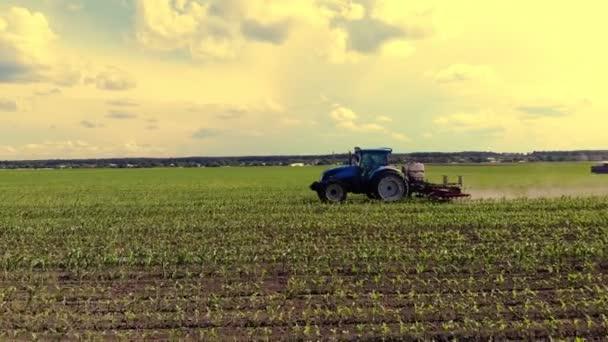 velký tahač projíždí v terénu s mladou kukuřicí. procesu zpracování kukuřičných plodin mezi jednotlivými řádky. Na Sunset. Jaro.