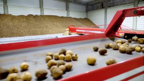 zblízka, brambory se přesunou na speciální pásový pás a zapadají do skladovací místnosti, skladiště pro zimní uskladnění. sklizeň brambor, plodiny