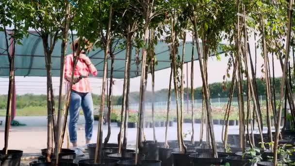 woman gardener watering, hosing plants with sprayer in garden center, near greenhouse. watering the seedlings, young trees in pots, for sale. gardening , horticulture