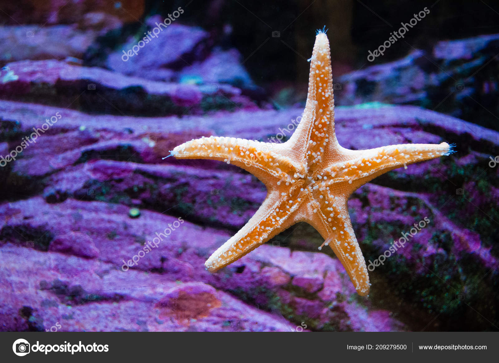 étoile Mer Sur Verre Vitre Dans Aquarium Seattle Avec Fond