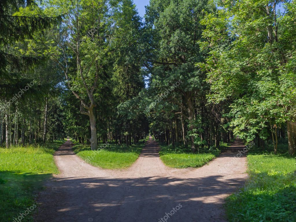The junction, three forest roads converge into one.
