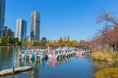 Ueno Park is most popular public relax green space lake with pedal boats in central of Tokyo established in 1873 with 8,800 trees and sakura that bloom in spring. November 2017.,Tokyo Japan.