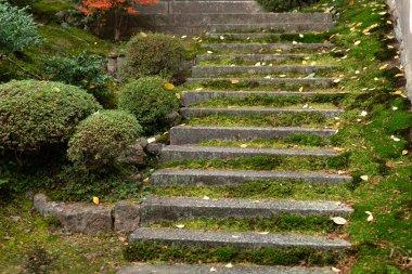 "Картина, постер, плакат, фотообои ""Мосс лестница старый мокрых влажные камень stairway в лесном храме"", артикул 208067290"