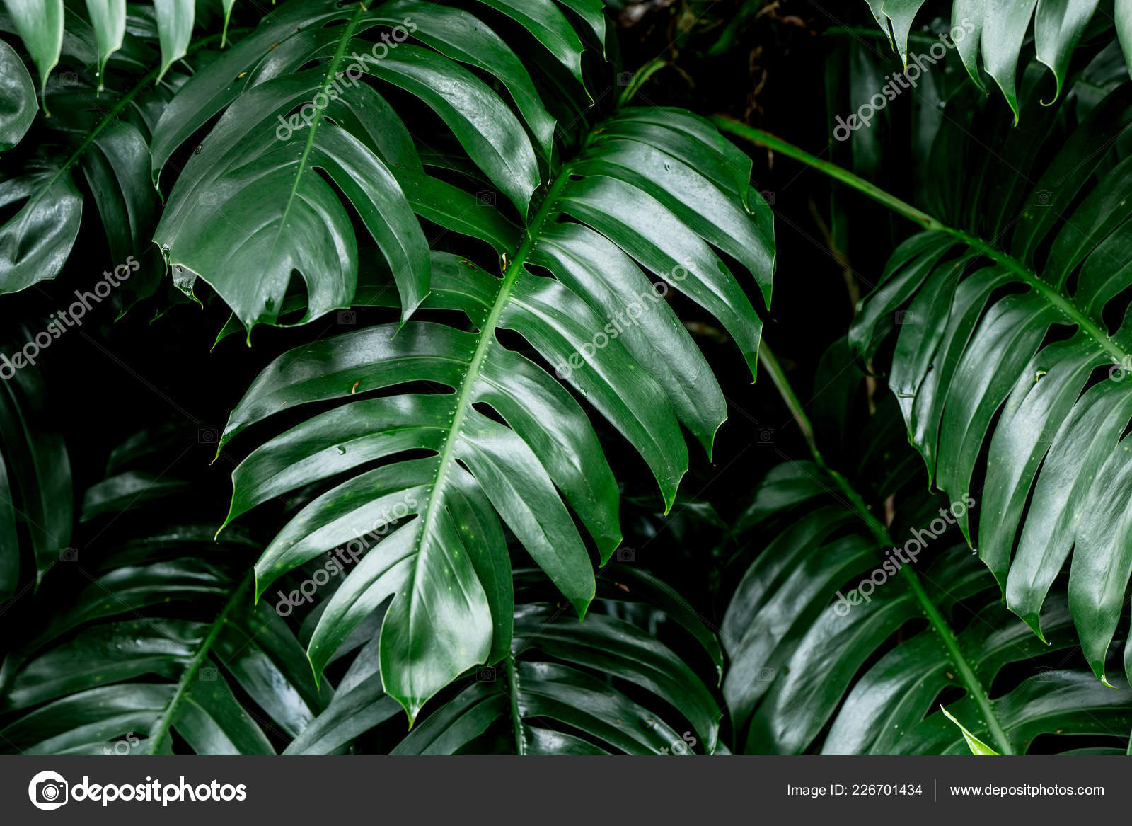 Tropical Deep Forest Leaves Jungle Leaves Green Plant Wet Rainforest Stock Photo C Coffeekai 226701434 A whopping 30 percent of the world's forests has been destroyed, while another 20 percent has been degraded (and most of the rest has been fragmented, leaving only. depositphotos