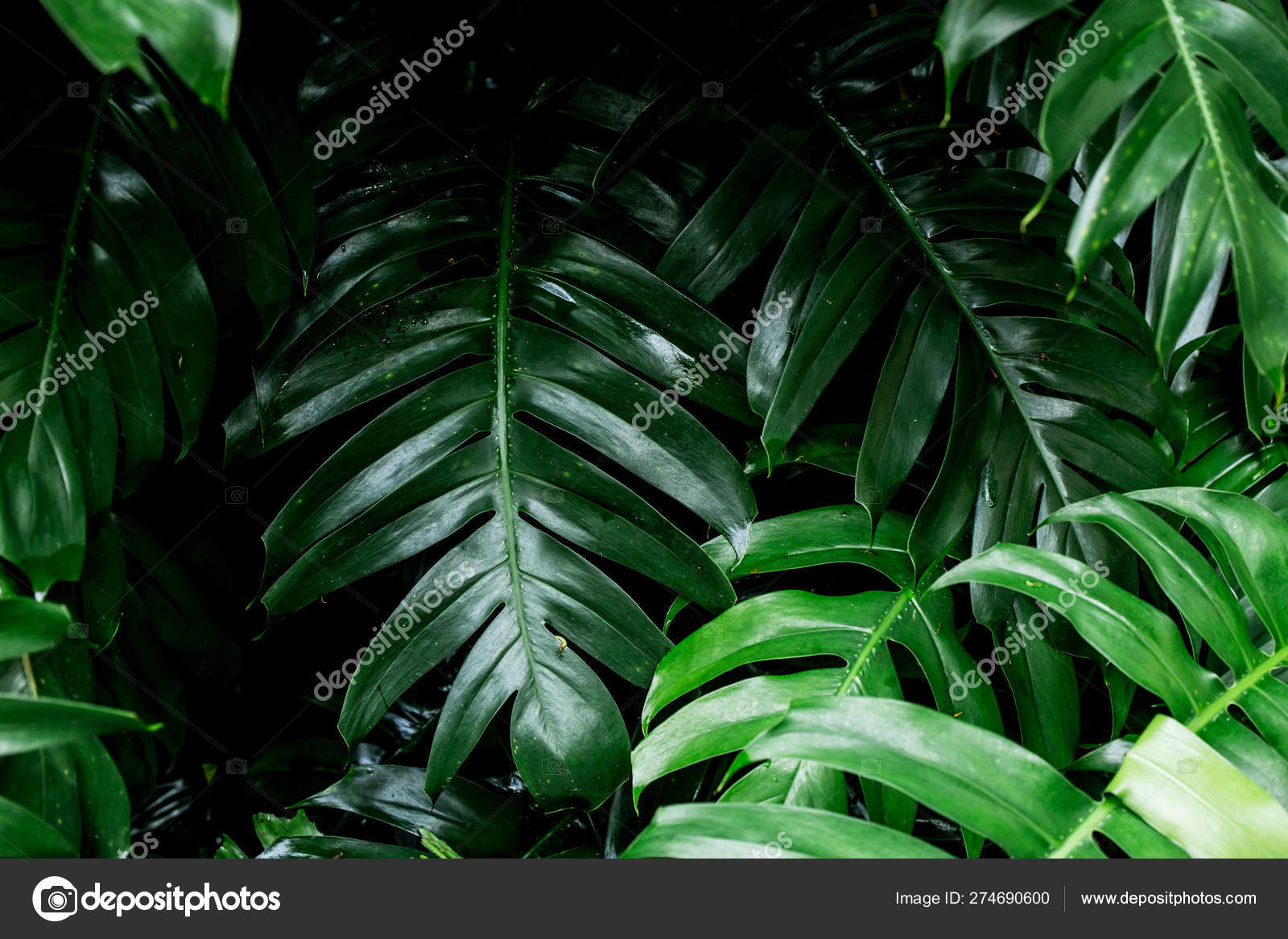 Tropical Rainforest Green Leaf Image Home Decoration Stock Photo C Coffeekai 274690600 Download tropical rainforest stock vectors. tropical rainforest green leaf image home decoration stock photo c coffeekai 274690600