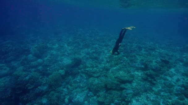 Donna apnea profonda su una barriera corallina
