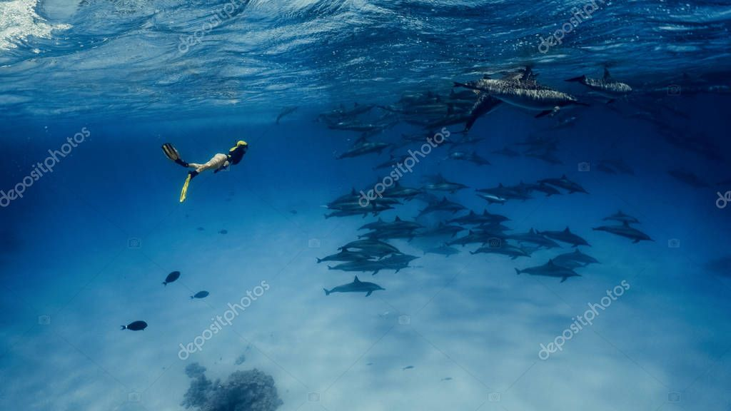 A pretty freediver swims with dolphins in Red sea