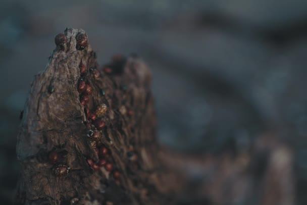 Coccinella sulla macro tronco dellalbero