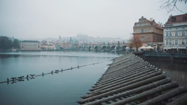 Racci sedící na trubkách u řeky Prahy u Karlova mostu. Faunu, ptáky. Natočeno na RED kameře, 10 bitový clolor
