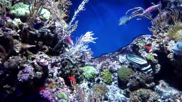 Small exotic ocean fish various type swimming among natural coral reef.