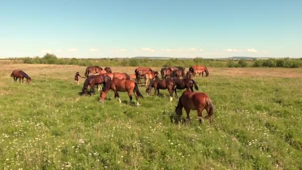 Koně stojí na zelené louce a pasou trávu na zemědělské půdě,