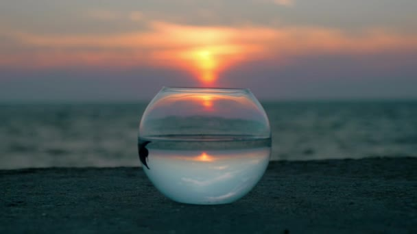 rounded fishbowl standing on the beach float little fish. reflected sky and seascape at sunset. concept nature protection.