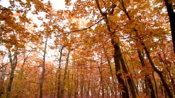 Autumn landscape. The path is strewn with dry leaves in the forest.