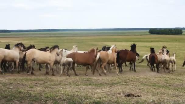 Pferde laufen rund um den Bereich