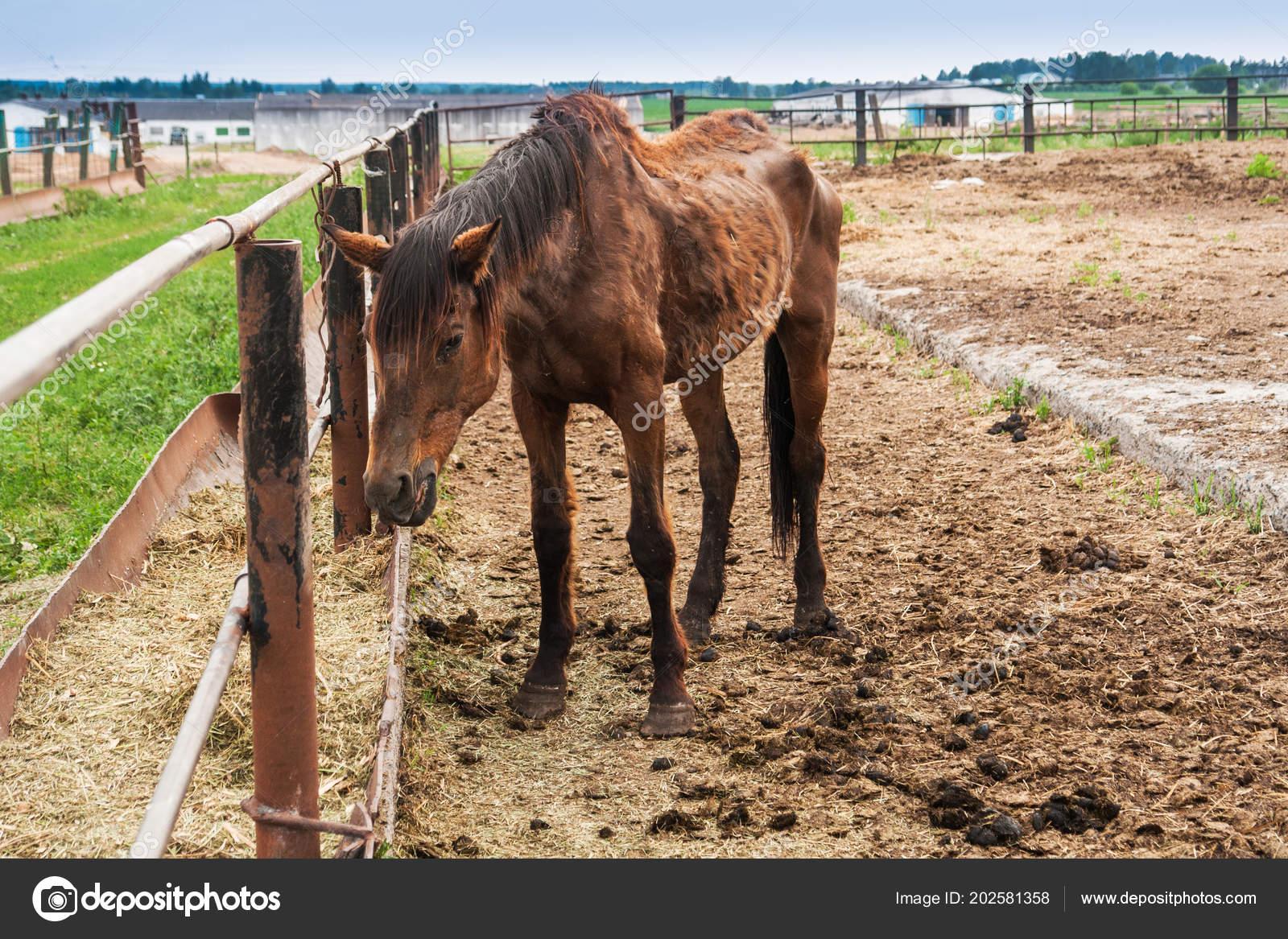 Thin big horse ⬇ Stock Photo, Image by © ViShark #202581358