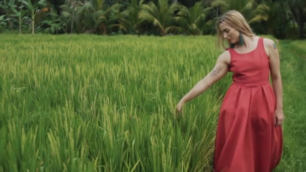 Front view of a slow-moving shot a young girl wearing a red dress with a long skirt and green big earrings, loose long hair, walks along the rice field alone, gently touches the hand of rice spikes