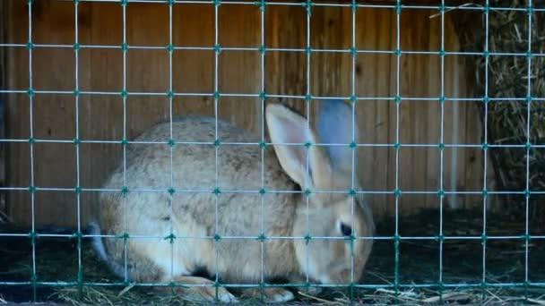 Králíci v kleci jíst trávu. Určené pro chov králíků. Žijí na venkově.