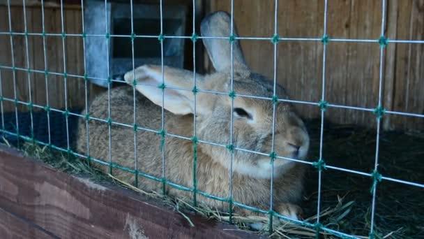 Kaninchen im Käfig fressen Gras. Kaninchen, die zur Zucht bestimmt sind. Sie leben auf dem Land.
