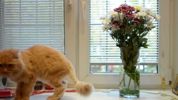pets és állatok koncepció - macska, ablakpárkányon otthon