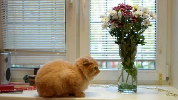 Haustier-Konzept - Katze auf Fensterbank zu Hause