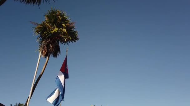Cuban Flag Palm Tree. Cuban flag against a tropical palm tree and blue sky.