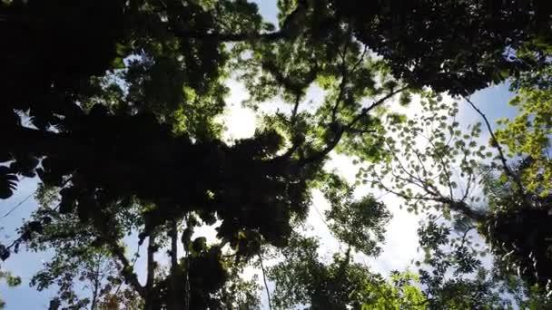 Luce solare attraverso le foglie degli alberi. Giungla foresta pluviale sfondo della natura