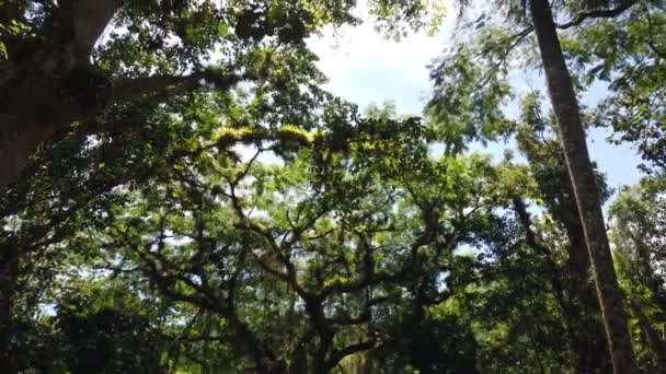 Sonnenlicht durch Baumblätter. Dschungel Regenwald Natur Hintergrund