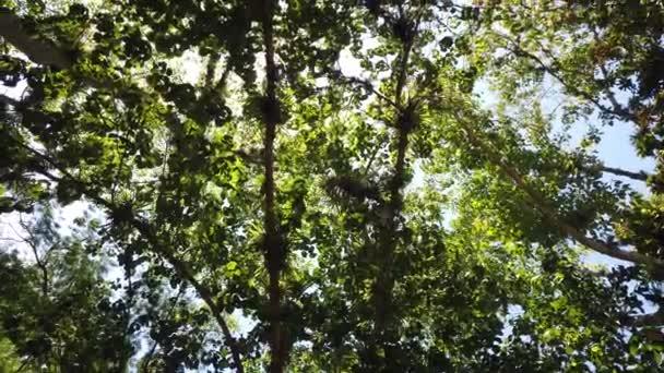 Napfény a fa levelei. A dzsungelesőerdők természet háttere