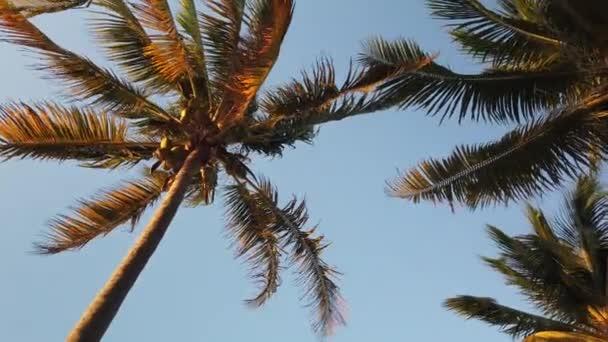 Szűz érintetlen karibi tengerparton naplementekor pálmák fa. Golden világos fény felett homokos strandok alkotják a félelmetes trópusi táj.