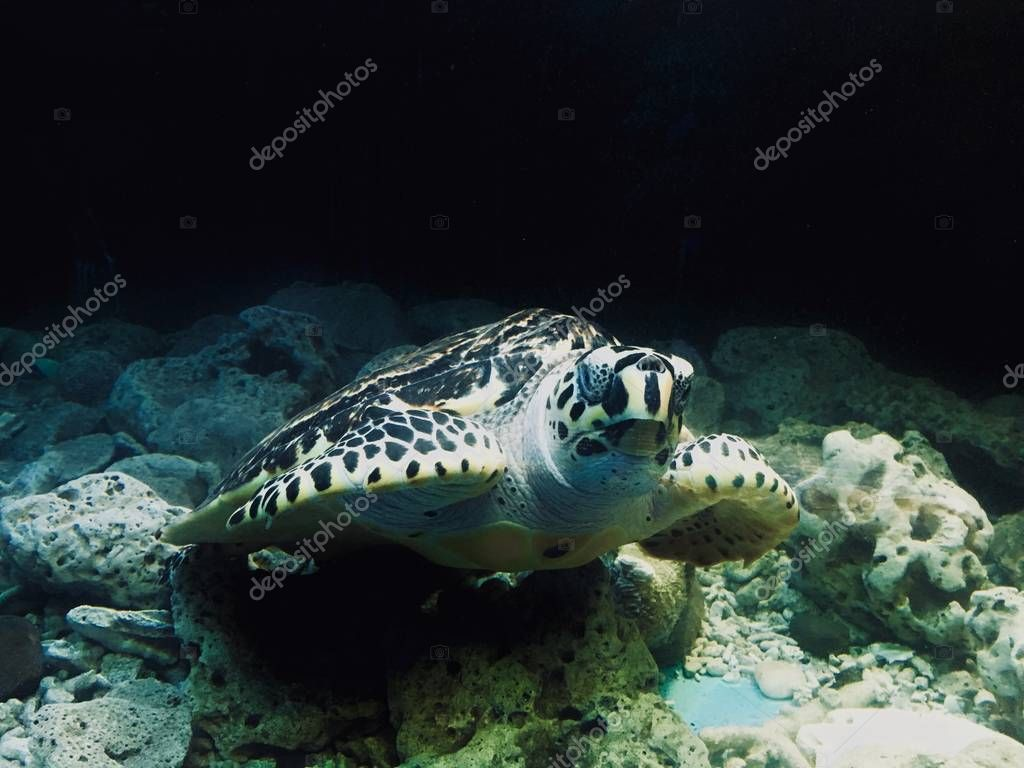 Closeup of turtle swimming underwater
