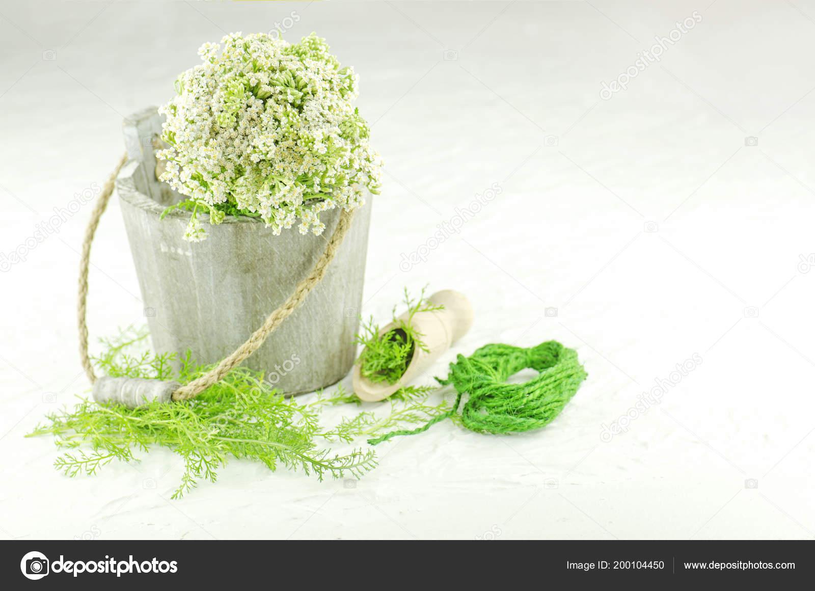 Bunch achillea millefolium white flower bundle yarrow yarrow white bunch achillea millefolium with white flower bundle of yarrow yarrow on white background yarrow in herbal medicine photo by lesichkalll27ail mightylinksfo