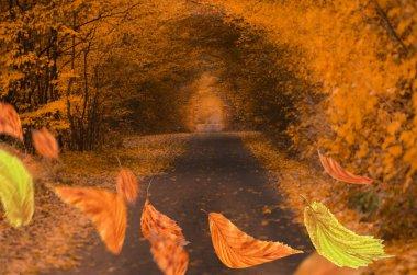 Beautiful colorful autumn fly leaves. Autumn leaves falling. Beautiful autumn  background