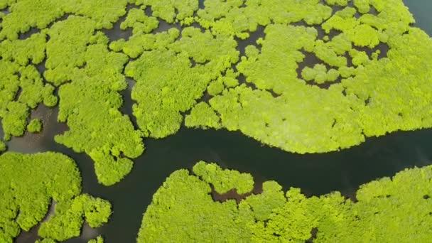 Tropický les s mangrovními stromy, výhled shora. Mangrovy a řeky.