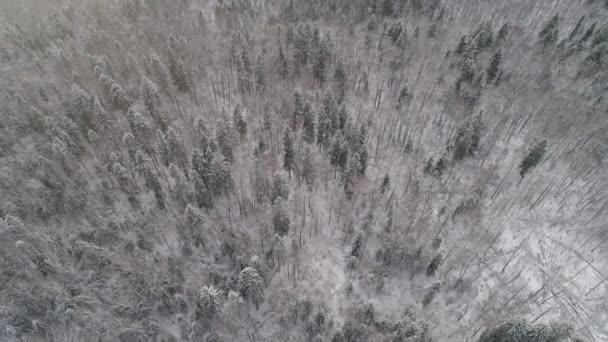 Winterwald. Blick von oben. Winterlandschaft. Nadel- und Laubbäume bei Frost.